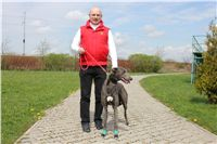 Chti_dostihy_April_Cup_2012_Czech_Greyhound_Racing_Federation_IMG_4695.JPG