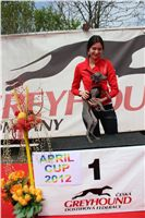 Chti_dostihy_April_Cup_2012_Czech_Greyhound_Racing_Federation_IMG_4705.JPG