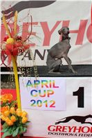 Chti_dostihy_April_Cup_2012_Czech_Greyhound_Racing_Federation_IMG_4722.JPG