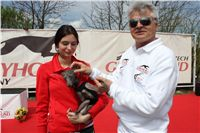 Chti_dostihy_April_Cup_2012_Czech_Greyhound_Racing_Federation_IMG_4742.JPG