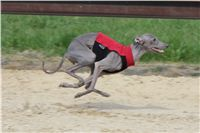 Chti_dostihy_April_Cup_2012_Czech_Greyhound_Racing_Federation_IMG_4753.JPG