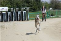 Chti_dostihy_April_Cup_2012_Czech_Greyhound_Racing_Federation_IMG_4794.JPG