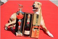 Chti_dostihy_April_Cup_2012_Czech_Greyhound_Racing_Federation_IMG_5074.jpg