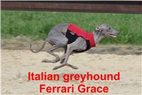 Ferrari_Grace_Czech_Greyhound_Racing_Federation_IMG_4753.jpg