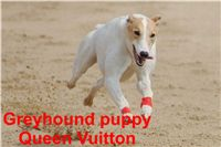 Queen_Vuitton_Czech_Greyhound_Racing_Federation_DSC08043.jpg