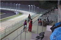 night_test_race_Greyhound_Park_Motol_IMG_8640.JPG