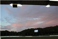 night_test_race_Greyhound_Park_Motol_IMG_8644.JPG