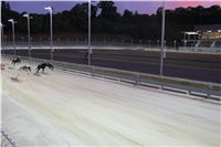 night_test_race_Greyhound_Park_Motol_IMG_8680.JPG