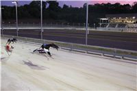 night_test_race_Greyhound_Park_Motol_IMG_8681.jpg