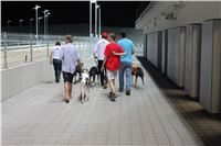 night_test_race_Greyhound_Park_Motol_IMG_8763.JPG