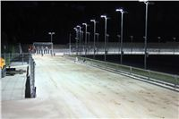 night_test_race_Greyhound_Park_Motol_IMG_8773.JPG
