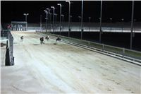night_test_race_Greyhound_Park_Motol_IMG_8779.JPG