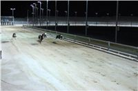 night_test_race_Greyhound_Park_Motol_IMG_8780.JPG