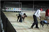 night_test_race_Greyhound_Park_Motol_IMG_8818.JPG