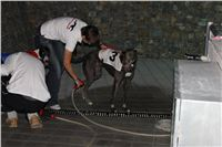 night_test_race_Greyhound_Park_Motol_IMG_8820.JPG