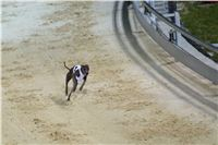 night_test_race_Greyhound_Park_Motol_DSC_8144.jpg