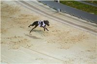 night_test_race_Greyhound_Park_Motol_DSC_8146.jpg