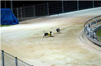 night_test_race_Greyhound_Park_Motol_DSC_8157.jpg