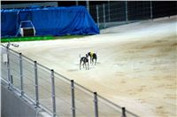 night_test_race_Greyhound_Park_Motol_DSC_8162.jpg