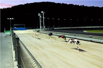 night_test_race_Greyhound_Park_Motol_DSC_8020.jpg