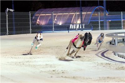 night_test_race_Greyhound_Park_Motol_DSC_8059.jpg
