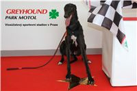 Gabbana_Greyhound_Park_Motol_Czech_Racing_CGDF_2.jpg
