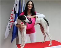 Dolce_Trio_race_Greyhound_Park_Motol_CGDF.jpg