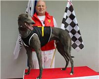 Gucci_Trio_race_Greyhound_Park_Motol_CGDF_.jpg