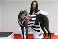 Prague_racing_Greyhound_Park_Motol_CGDF_IMG_0365.JPG