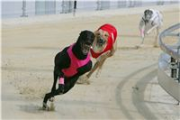 Prague_racing_Greyhound_Park_Motol_CGDF_NQ1M0051.JPG