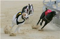 Prague_racing_Greyhound_Park_Motol_CGDF_NQ1M0115.JPG