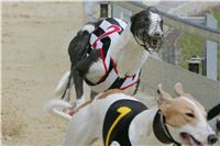 Prague_racing_Greyhound_Park_Motol_CGDF_NQ1M0116.JPG