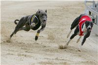 Prague_racing_Greyhound_Park_Motol_CGDF_NQ1M0201.JPG