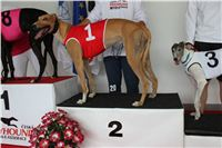 Trio_race_Greyhound_Park_Motol_CGDF_IMG_0017.JPG