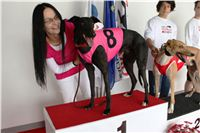 Trio_race_Greyhound_Park_Motol_CGDF_IMG_0018.jpg