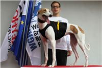 Trio_race_Greyhound_Park_Motol_CGDF_IMG_0113.JPG