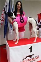 Trio_race_Greyhound_Park_Motol_CGDF_IMG_0172.JPG
