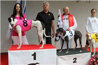 Trio_race_Greyhound_Park_Motol_CGDF_IMG_0186.JPG