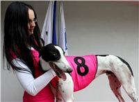 Trio_race_Greyhound_Park_Motol_CGDF_IMG_0248.JPG