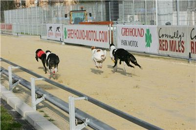 Greyhound_Race_Track_Prague_NQ1M0165.JPG