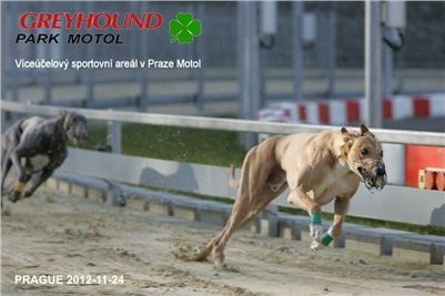 Greyhound_Racing_Prague_CGDF_NQ1M0048.jpg