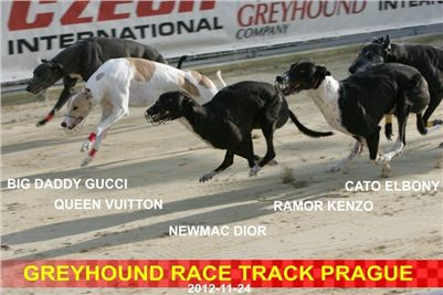 Greyhound_Racing_Prague_CGDF_NQ1M0080.jpg
