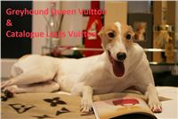 Greyhound_Queen_Vuitton_Catalogue_Louis_Vuitton_Czech_Greyhound_Racing_Federation.jpg