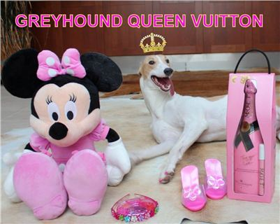 Queen_Vuitton_Greyhound_Birthday_Czech_Greyhound_Racing_Federation-r.jpg