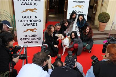 Zlaty_chrt_Golden_Greyhound_Awards_2012_media_CGDF_IMG_5222.JPG