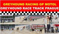 Greyhound_Racing_Greyhound_Park_Motol_Prague_CGDF.jpg
