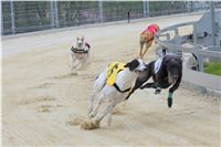 Greyhound_Racing_Greyhound_Park_Motol_Prague_CGDF_6549.JPG