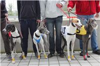 Greyhound_Racing_Greyhound_Park_Motol_Prague_CGDF_6556.JPG