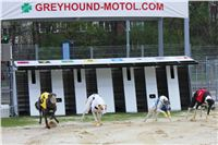 Greyhound_Racing_Greyhound_Park_Motol_Prague_CGDF_6561.jpg
