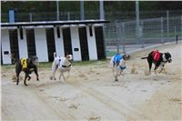 Greyhound_Racing_Greyhound_Park_Motol_Prague_CGDF_6562.JPG
